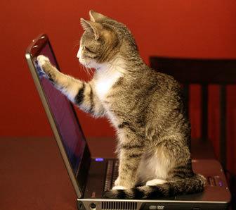 キーボード猫