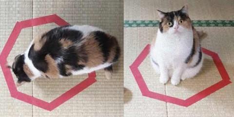 テープの囲い猫