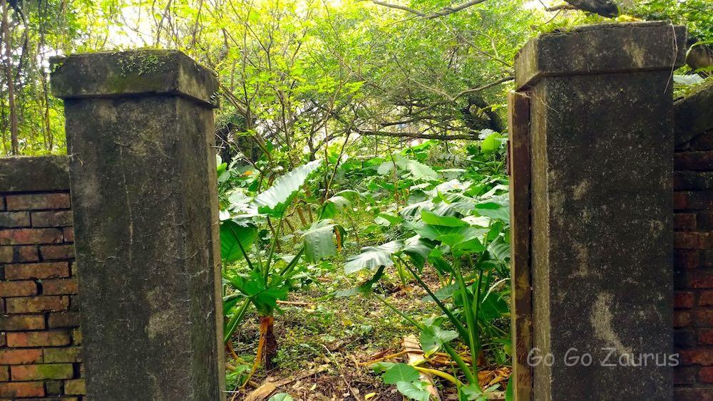 宅地がジャングルになっている
