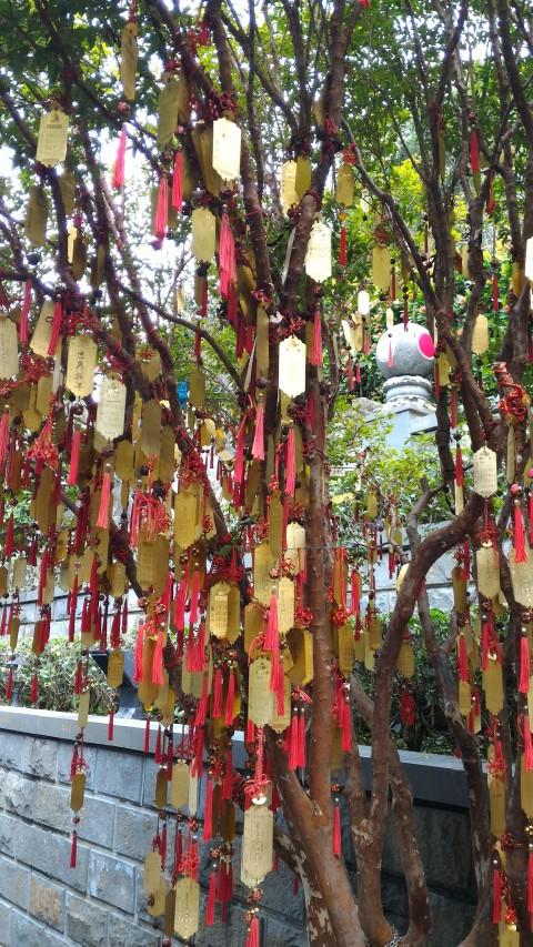 凌霄寶殿の裏の木に括られた願い事