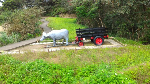 樟樹歩道 荷車を引く牛
