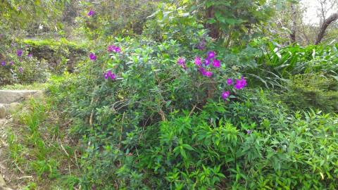樟樹歩道沿いに咲くお花