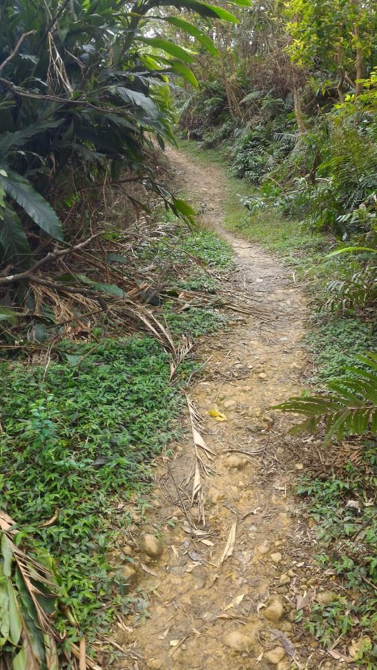 何気なく案内板に従うとジャングルに入る