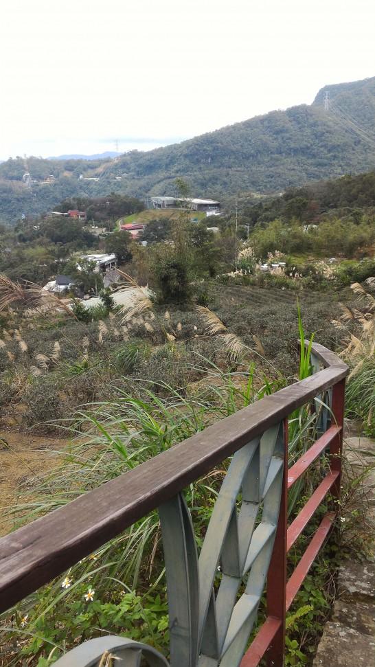 樟湖步道から見る茶畑