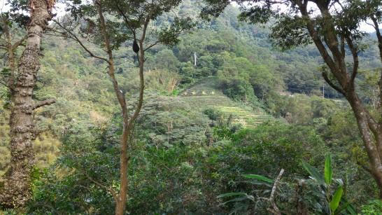 邀月茶坊の席から見る前面の風景