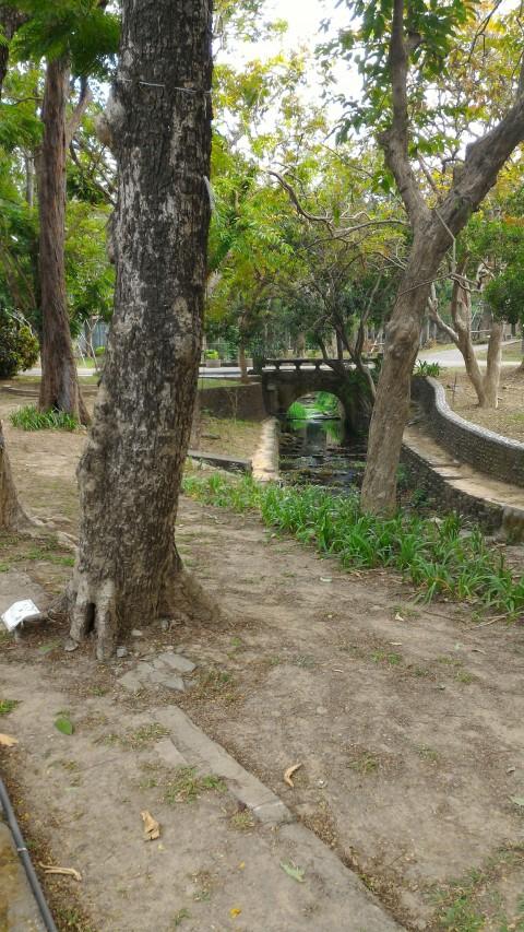 嘉義公園5