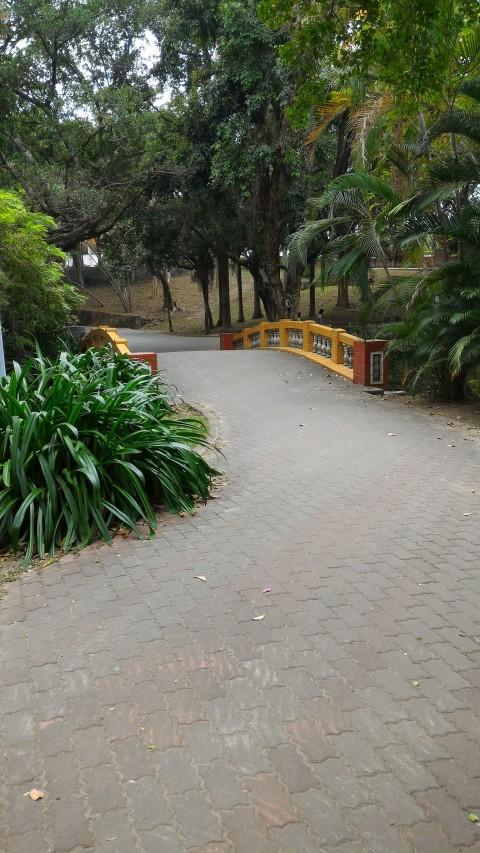 嘉義公園 散歩道