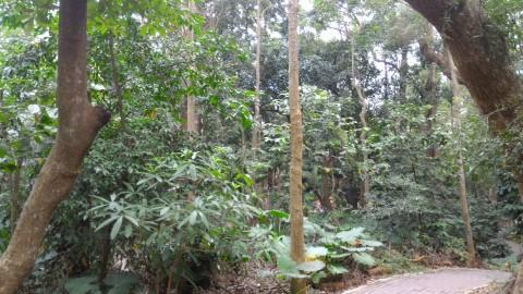 嘉義公園9
