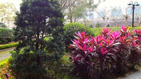 総統府の中庭3