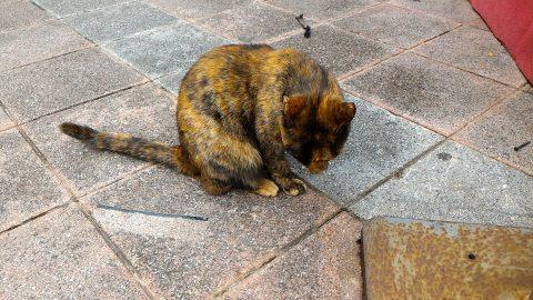西門紅楼北側の広場で猫発見