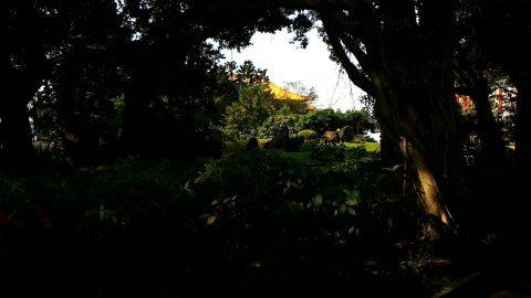 木の間から歌劇場