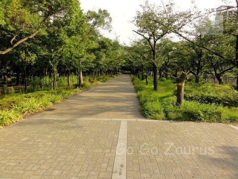 南外濠東の桜並木