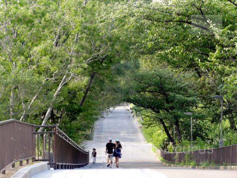 梅林西側の坂道2