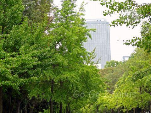 市民の森2