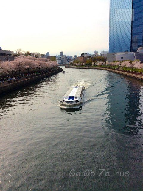 水上バスと桜