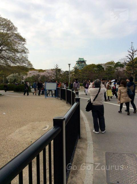 玉造口からの道と桜