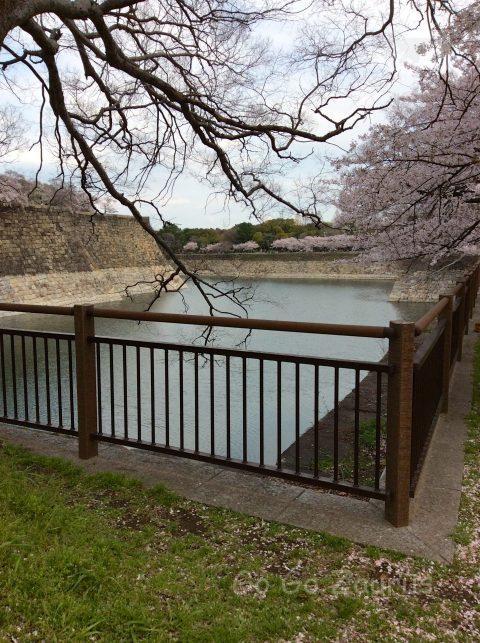南外濠の桜
