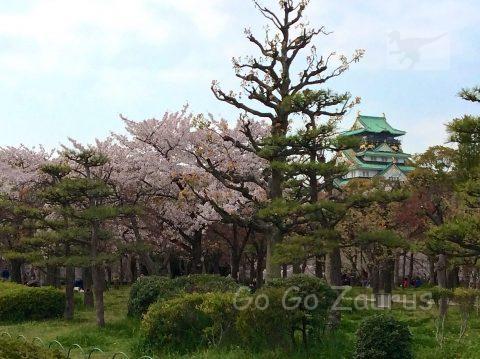 玉造口付近の桜と天守閣