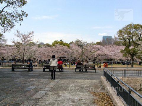 城南地区の桜と天守閣