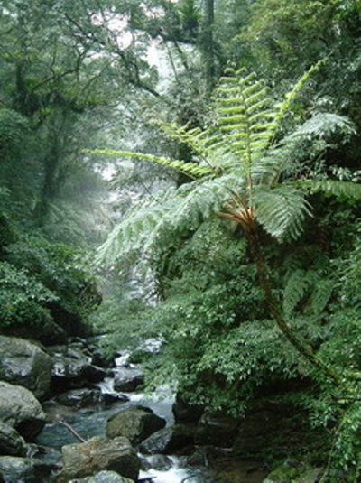内洞国家森林遊楽区 出典:行政院農委会林務局