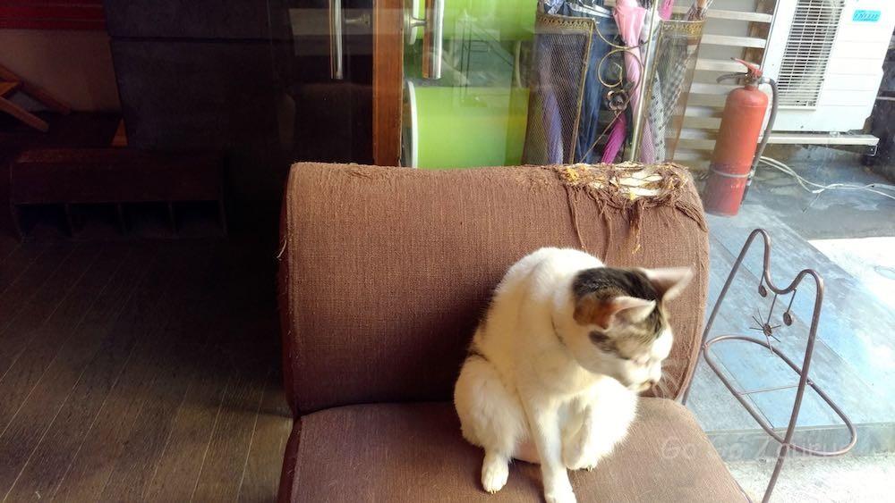 猫爪の餌食になった椅子