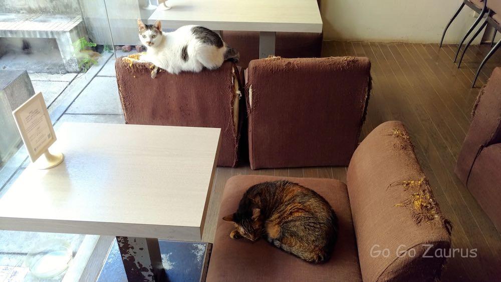 猫は客以上?