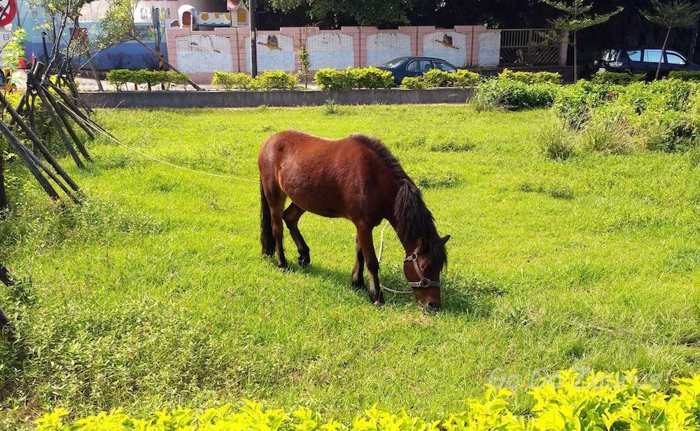 海科館駅から博物館への途中 馬がいた