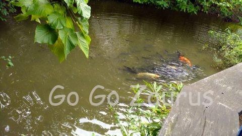 生態池と魚