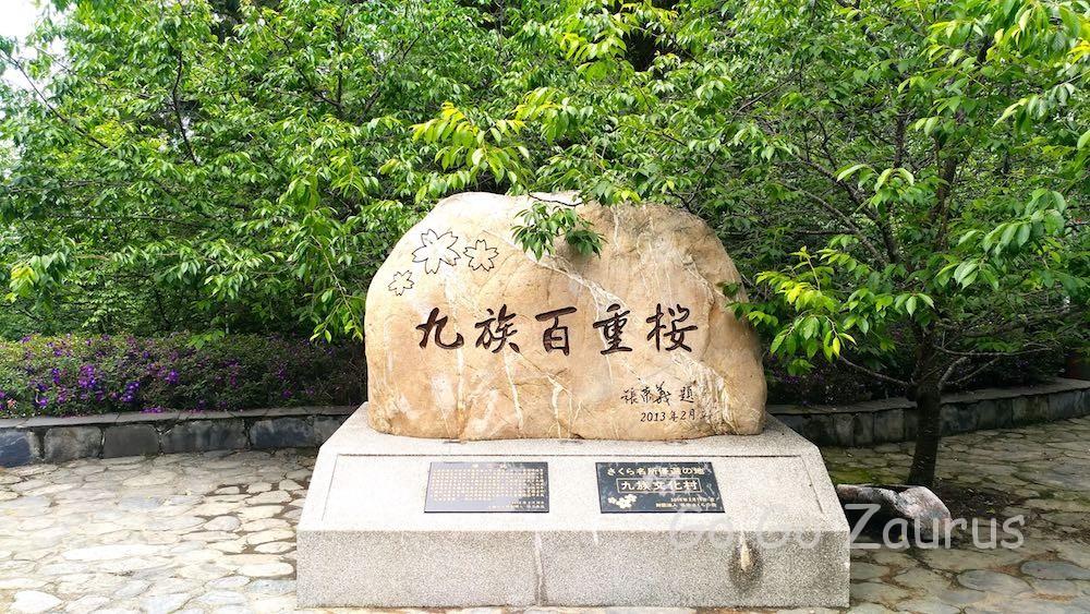 九族百重桜