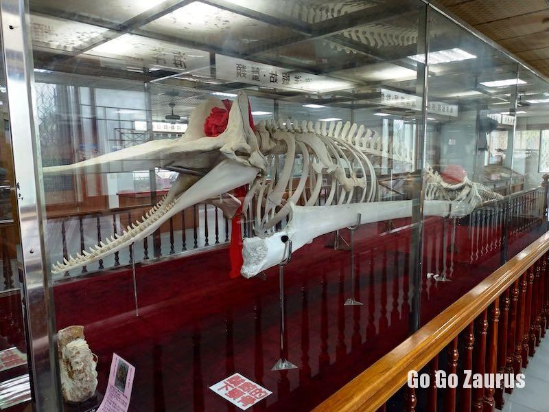 マッコウクジラ標本