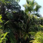 台北市立植物園
