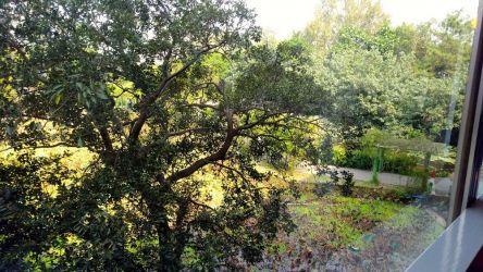 忘言軒から見た植物園