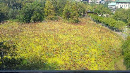 3階休憩室から見た植物園